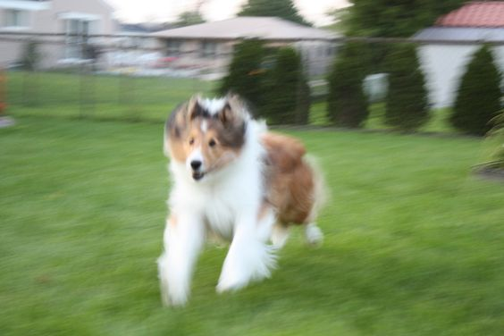 My Dog Running