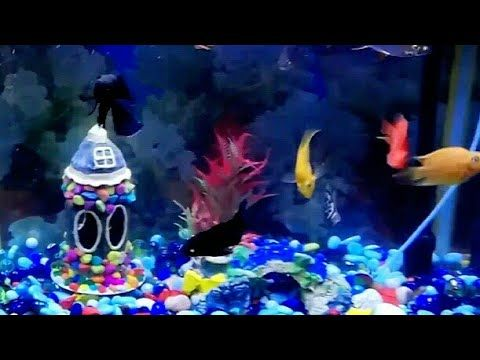 Aquarium Decoration Item With Plastic Bottle Aquarium