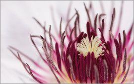 Ursula Di Chito - Blütentraum