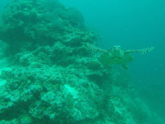 Uma bela imagem do mergulho na Grande Barreira de Corais na Austrália pra desejar a todos um ótimo feriado! @gianvalias #lovewhitsundays #seeaustralia #hamiltonisland #thisisqueensland #greatbarrierreef by venturasviagens http://ift.tt/1UokkV2