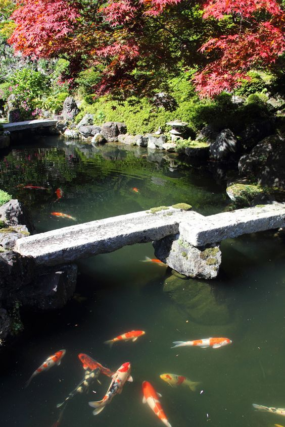 Japanese garden stone bridge over koi pond garden for Japanese koi water garden