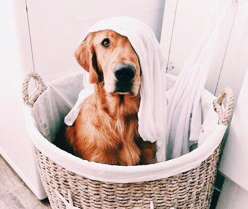 Pinterest Mercyxk Instagram Mercyxk Cute Animals Dogs Animals