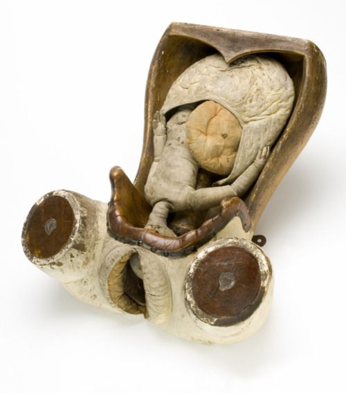 Obstetric teaching model 18th century, Italy