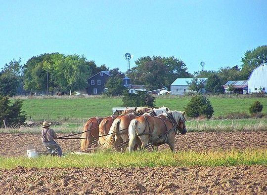 missouri amish seymour webster county