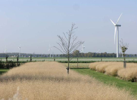 Siergrassen in een moderne boerderij tuin in Flevoland met uitzicht over de akkers en op de windmolens, tuinontwerp van Locus Flevum