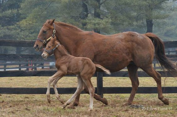 Country Life and Merryland Farms   Final Humor - Freedom Child colt. March 14 at 2:09pm ·  Foaled March 12 at 6:52 pm