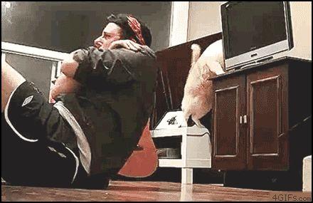 Ne Vous Fiez pas aux Apparences, les Chats sont de Vrais Enfoirés. La Preuve !