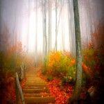 autumnfogg_1prrykdb