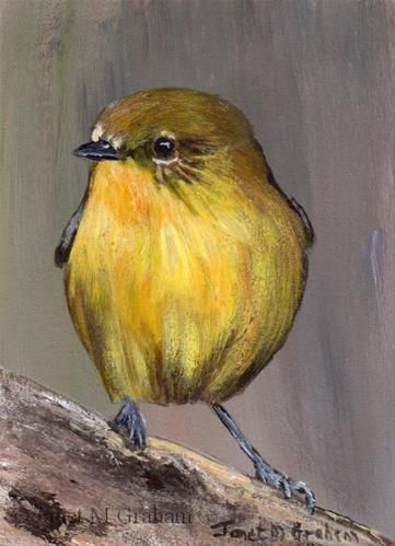 """Daily Paintworks - """"Yellow Thornbill ACEO"""" - Original Fine Art for Sale - © Janet Graham"""