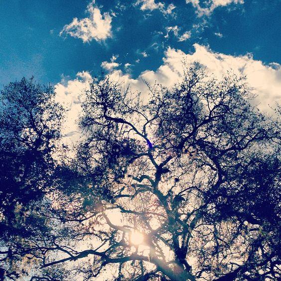 florida.sky.