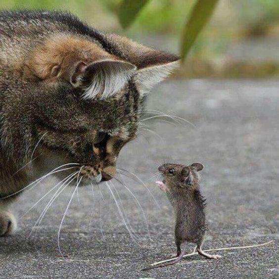 Bon écoute mon vieux, c'est pas parce que t'es plus grand que tu me fais peur !... - Mimie petite souris, méfie-toi quand même car tu commences à m'agacer....