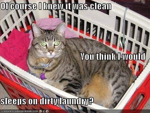 The Right Detergent For Washing Pet Blankets Cat Care