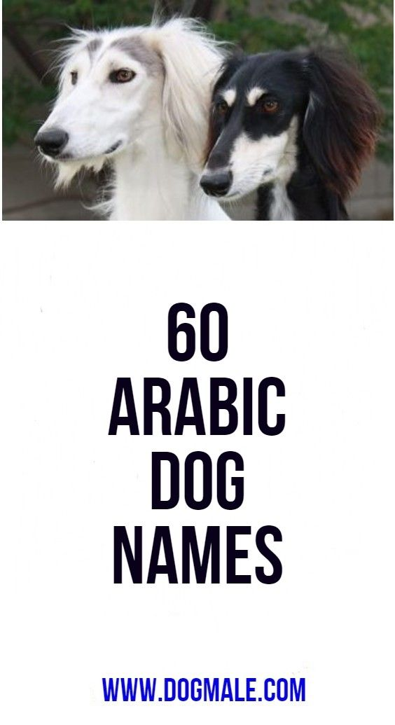 60 Arabic Dog Names Dog Names Best Dog Names Names