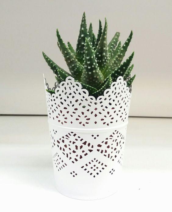 #aole #plant #pale #vintage #white #planter #lace