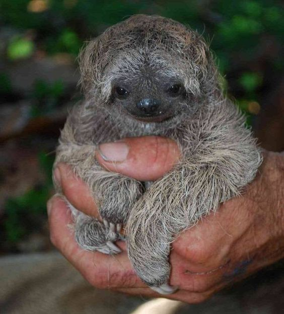 Why are sloths sooo slow? : TreeHugger