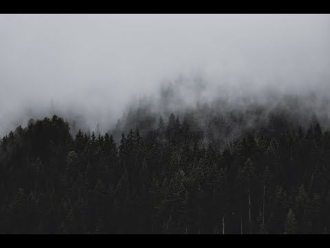 Pin By Zoroboro On Dark Forest In 2020 Forest Wallpaper Black Wallpaper Desktop Wallpaper Black