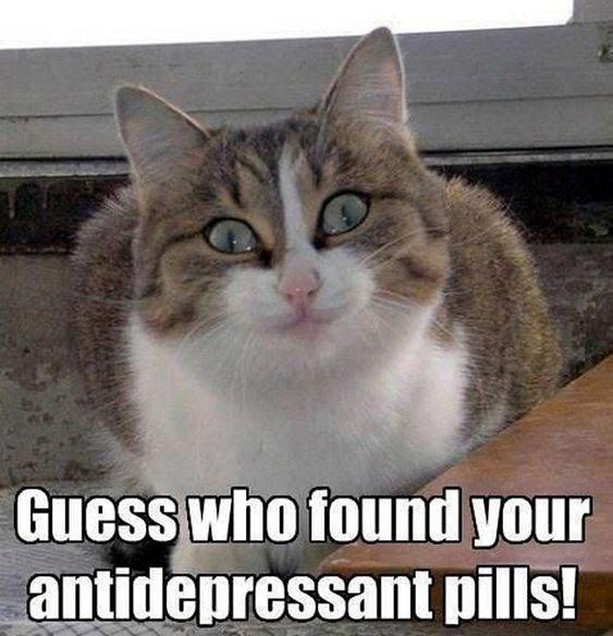 Best Cat Memes Of 2020 Funny Cat Memes Cat Memes Clean Animal Memes Clean