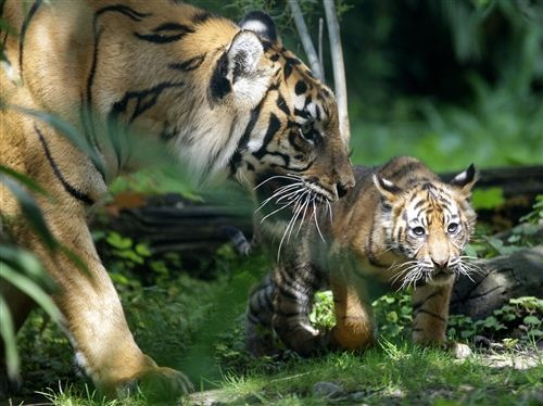 On the hunt with mom (Roland Weihrauch / AFP - Getty Images)