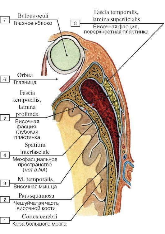 medicina ligamentelor articulare)