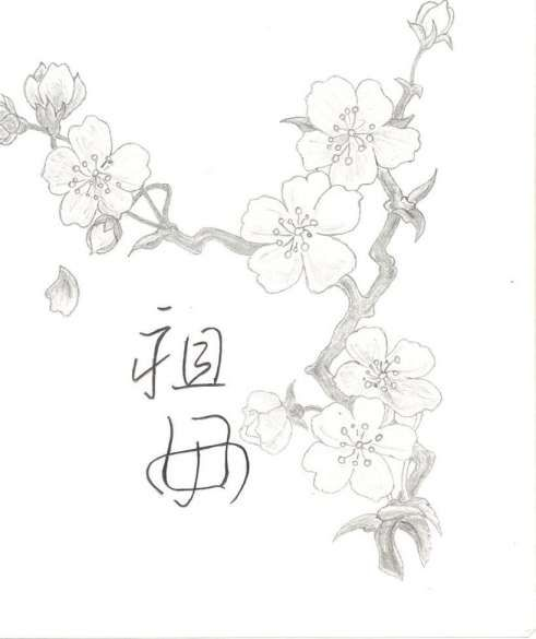 12 Japanese Flowers Drawing Flower Drawing Cherry Blossom Drawing Lotus Flower Drawing
