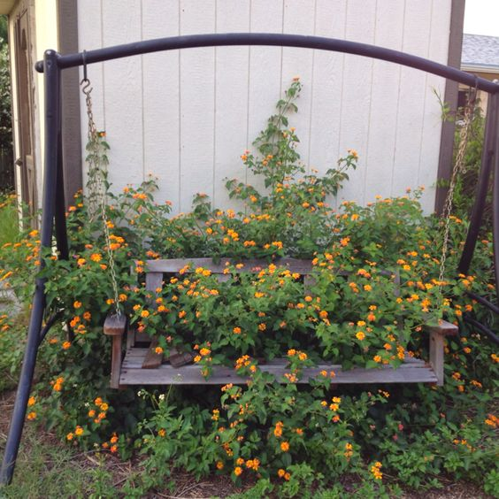 Wild Backyards : Wild flowers in my backyard I love this  Gardening  Pinterest