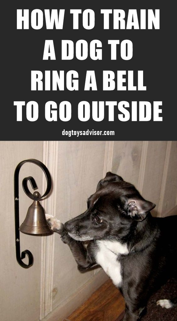 Teaching Your Dog To Ring A Bell To Go Outside Is A Great Trick