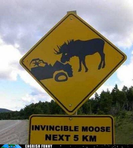 This show be somewhere in Wyoming....moose are beautiful and terrifying