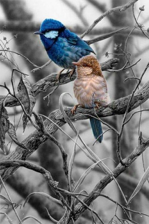 Beautyfulthingsworld Black And White Birds Splash Images Splash Photography