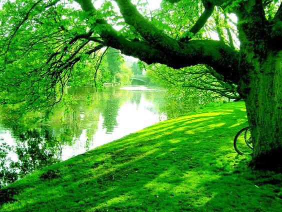 cor verde floresta - Pesquisa Google