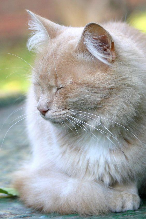 Transient's Cats v2 5bb3f5235b6a6c8fd1764e630af1f918
