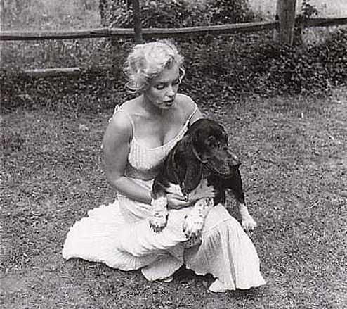 Even Marilyn Monroe loved Basset Hounds: Dog Hugo, Hound Dog, Bassett Hounds, Marilyn Monroe, Hugo Dog, White Dogs