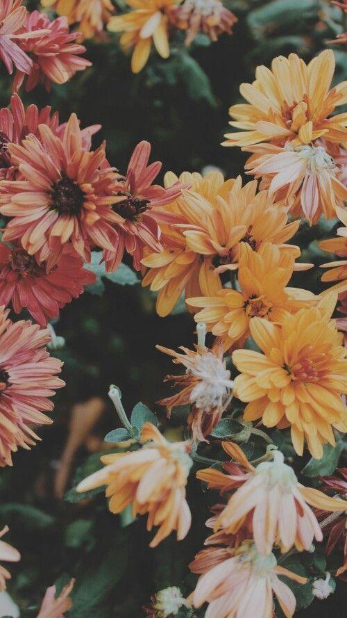 Imagen De Flowers And Wallpaper Flower Background Wallpaper