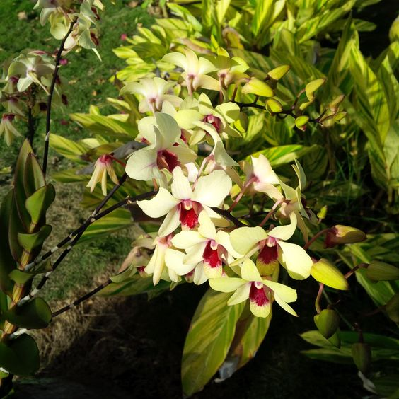 You'll find beautiful orchids dotting our lush gardens