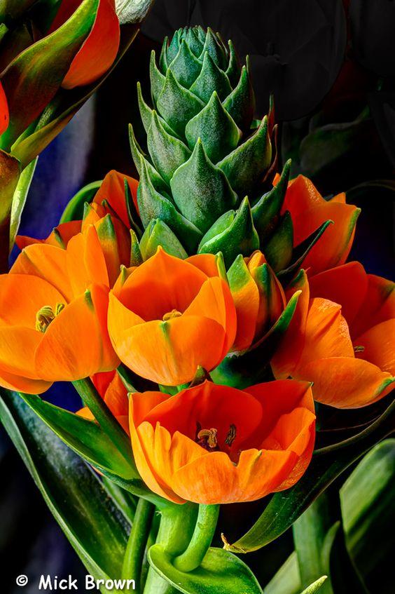 ~~Spring is Coming by Mick Brown - Orange Stars~~