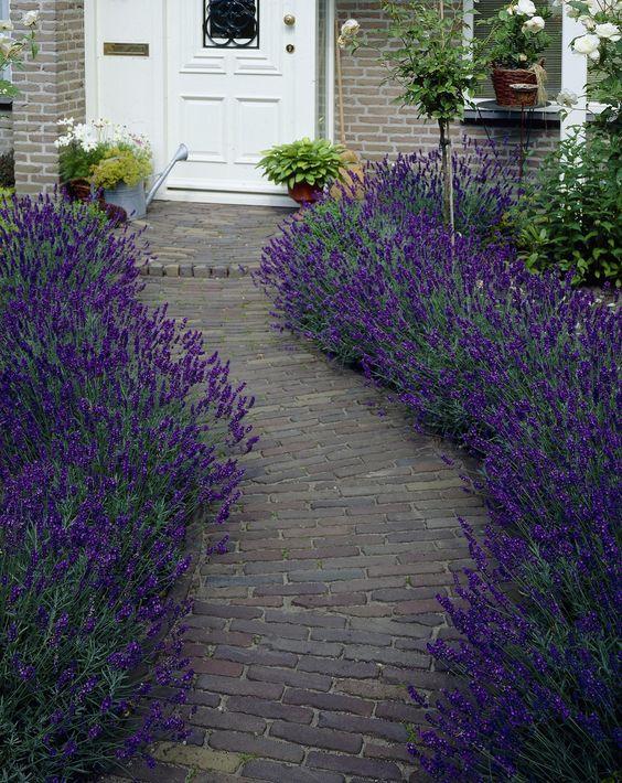 Lavender path newbuild front garden