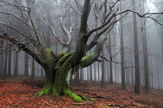 projekt natur & fotografie, Internationaler naturfoto - wettbewerb