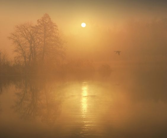 1X - Foggy sunrise by Vadim Trunov