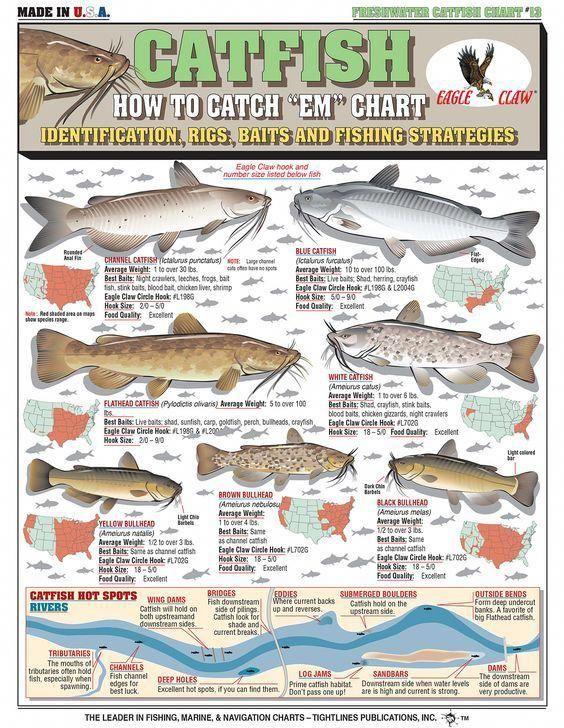 How To Catch Em Chart Bait Fishing Kayakfishing Fishinglures Freshwaterfishonline Catfish Fishing How To Catch Catfish Catfish