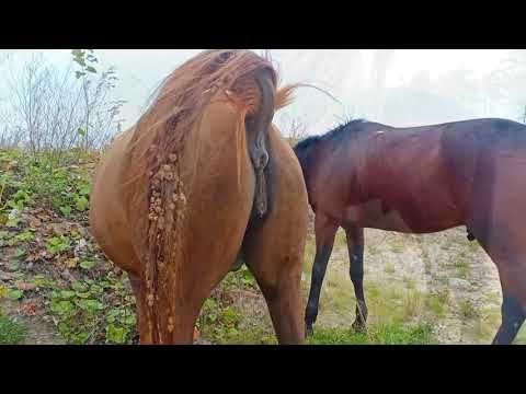 Youtube horse mating Female Bear