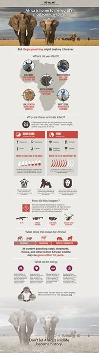 A Very informative infographic from our partners at AFRICAN WILDLIFE FOUNDATION(AWF) on Africa's Poaching Crisis. Read more here http://www.awf.org/landing/2013/05/poaching-infographic/