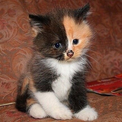 I want this kitten, so cute: