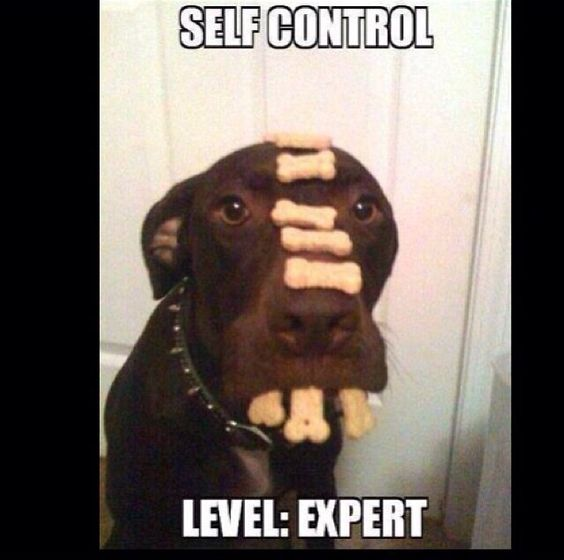 That Is Self Control Things To Make You Laugh Pinterest - This dog has some serious self control that will make you laugh