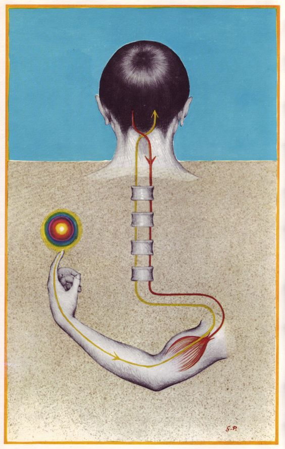Sata murmelia aineissa l 39 influx nerveux de la contraction for Influx nerveux