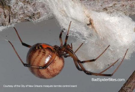 I am gonna have bad dreams tonight. Wait...brown widow???