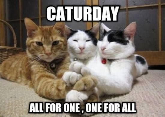 Caturday Good Morning from Sweden