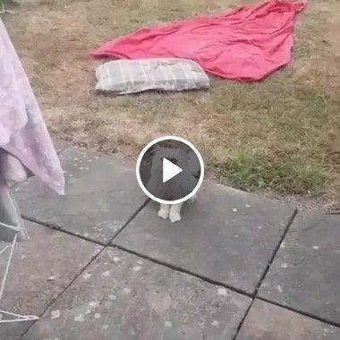 Parece que esse gato viu um fantasma bem feio