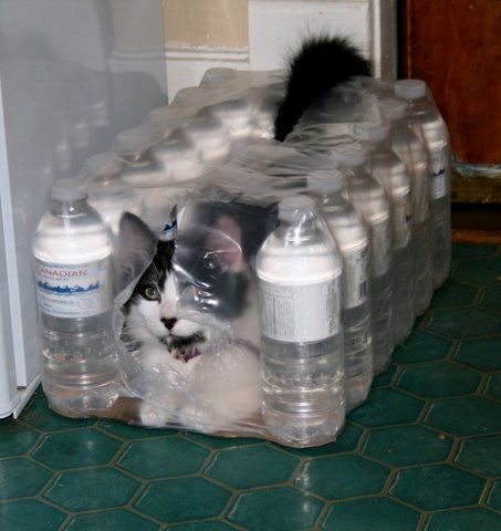 "Case of Water (and a Free Cat!) - Titled: ""Purr-ified Water"" (not a calico) - Today is World Water Day, Thursday, March 22, 2012.  Check out my Water Issues board @Sassafras on Pinterest."