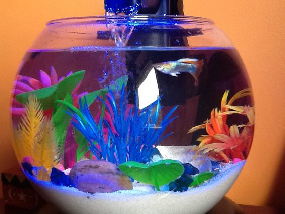 Pinterest the world s catalog of ideas for Betta fish bowl ideas