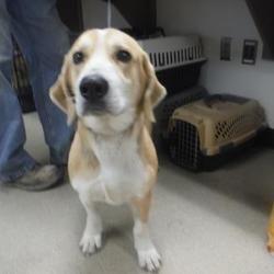 Pet Card Dog Adoption Shelter Dogs Pets