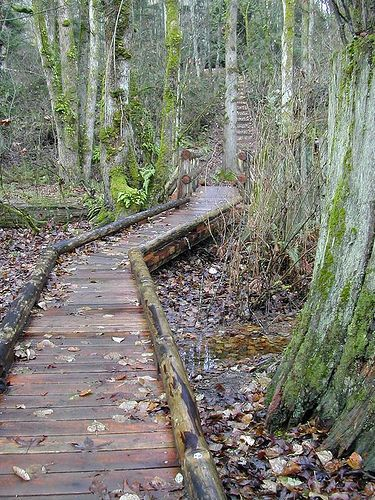 Wooden walkways photos and walkways on pinterest for Wooden pond ideas